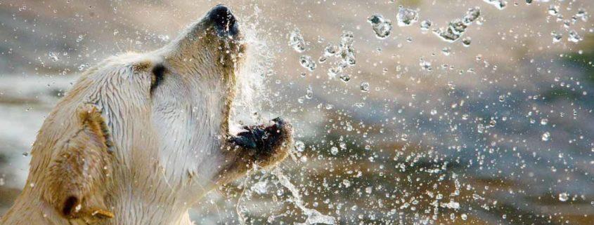 Hlajenje v pasjih dnevih / Foto: Pexels