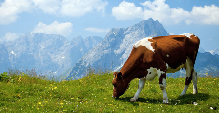 Zmanjšano uživanje rdečega mesa bi znižalo emisije CO2